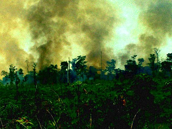 La selva lacandona.