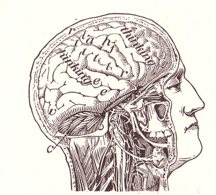 La información y el cerebro.