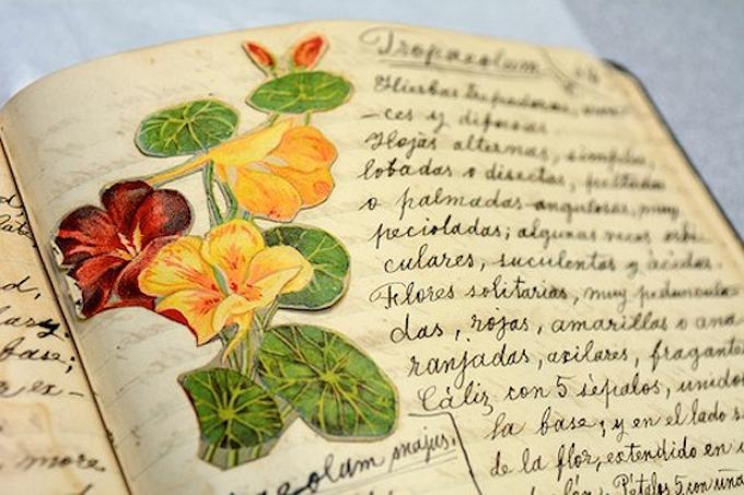 La Botánica antillana tiene 400 dibujos a color y 150 en blanco y negro, algunos de la autoría de Roqué. Foto por Juan Costa | Centro de Periodismo Investigativo.