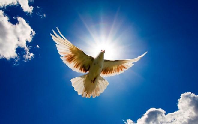 Deseos de Paz