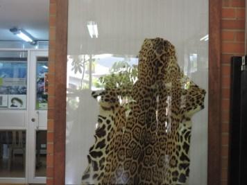 lepardo