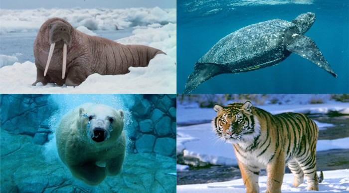 10 animales que no verán tus nietos.