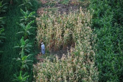 Agricultura en Egipto