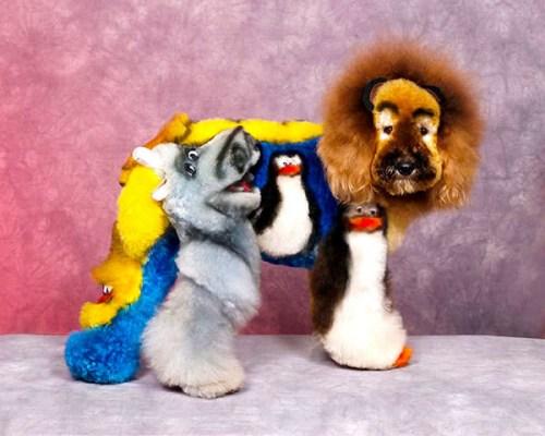 Exhibiciones caninas divertidas - Faunia