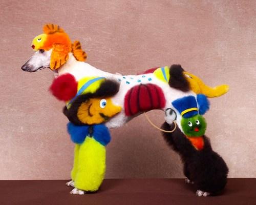 Exhibiciones caninas divertidas - Circo