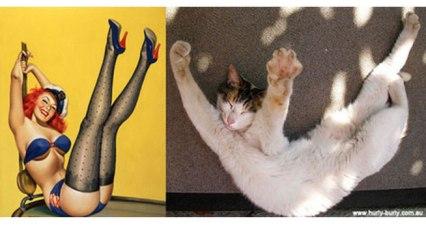 Gatos Imitando a Chicas Pin-up de los años 50.