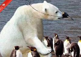 Increible Técnica de Camuflaje en el mundo animal.