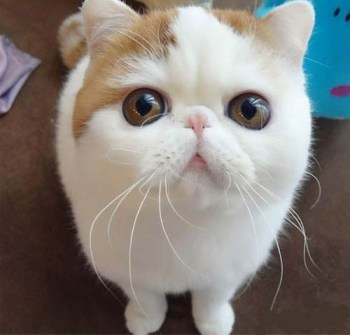Gato Grumpy