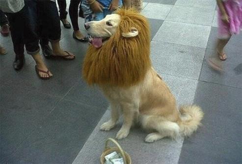 Disfraces para Mascotas en Halloween - Disfraz de léon para perros