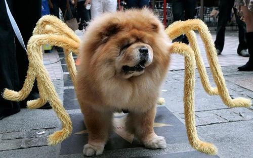 Disfraces para Mascotas en Halloween - Disfraz de Tarántula