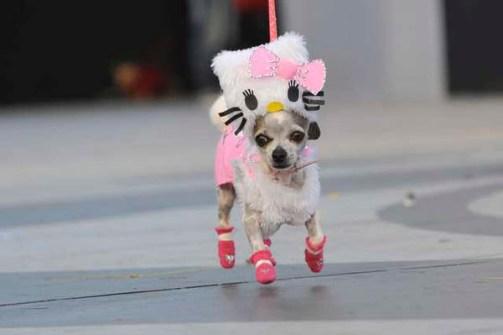 Disfraces para Mascotas en Halloween - Disfraz de Hello Kitty para Chihuahuas