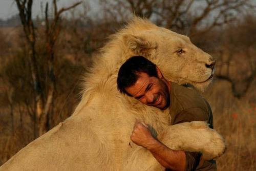 El abrazo de un hombre con leones