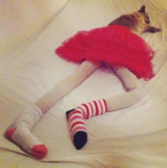 Gatos con medias