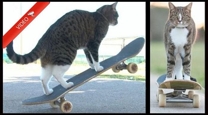 ¿Te imaginabas que un Gato era capaz de Patinar así?