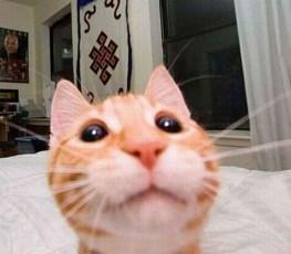 Selfies de Gatos