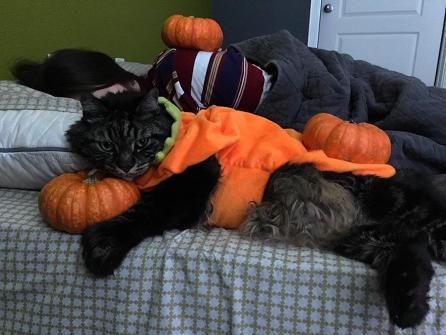 Mi-gato-ama-el-halloween