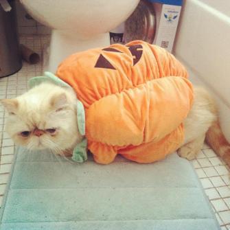 Mi-gato-calabaza