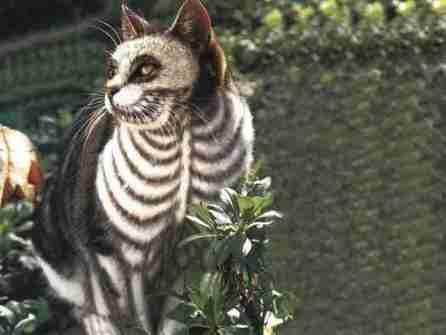 como-ambiantar-a-tu-mascota-para-halloween