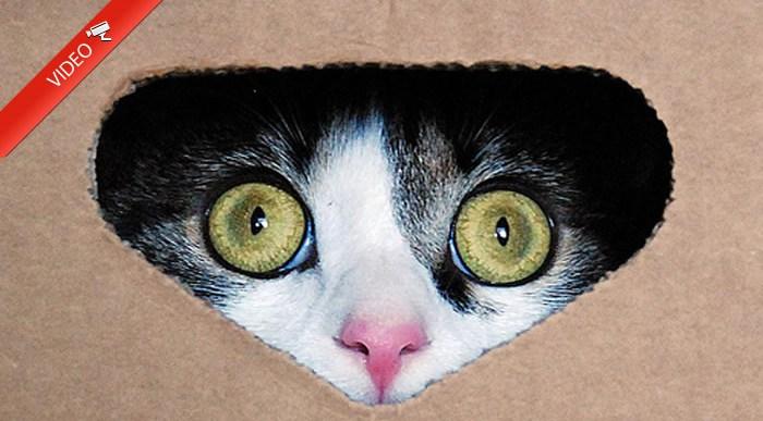 A los gatos grandes tambien les gustan las cajas.