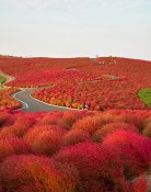 Hitachi park en Japón