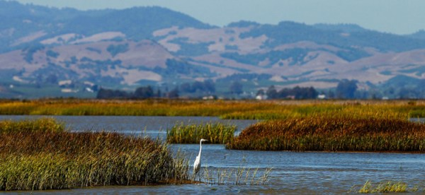 Restoration of San Francisco Bay wetlands is now crucial to local climate resilience