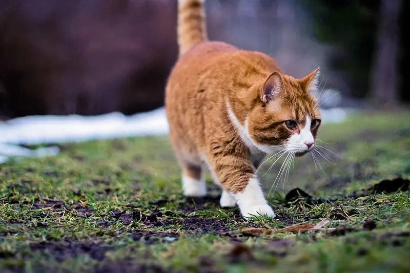 cat-775394_960_720