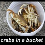 Crab Mentality (EP.37)
