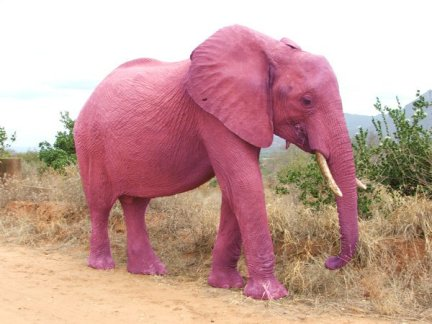Quand vous ne voulez pas penser à un éléphant rose, vous pensez à un éléphant rose