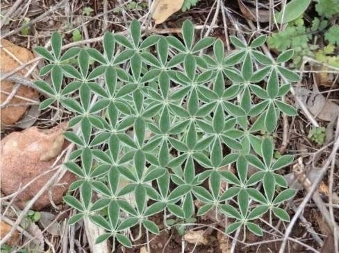 Mise à jour de situation terrestre : fleur de vie