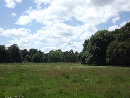 A sense of the park - looking across a meadow