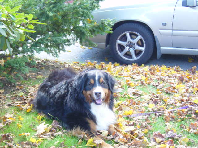 Molly_mauling_leaves