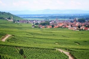 En revenant sur le mécanisme de régulation de plantation de vignes, l'Union européenne voulait soumettre la viticulture aux logiques libérales. Elle a été mise en échec… pour l'instant.