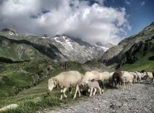 n64_pyrenees-692958_1920
