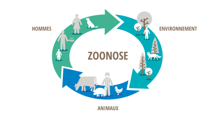 https://agriculture.gouv.fr/sites/minagri/files/zoonose-_0.png