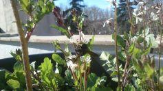 Rúculas y abejorros