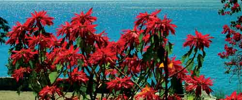 Red Flowers (photo: Smith and Riegel)
