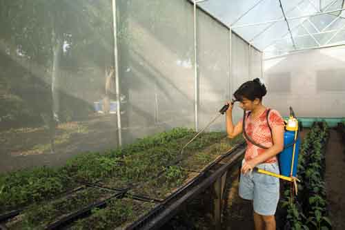18-year-old Reidi Ventura tends seedlings in her own greenhouse
