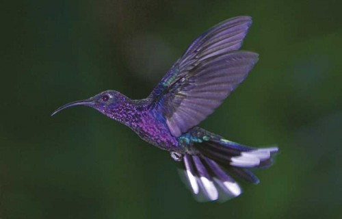 A visitor to the El Pilar garden specially designed for hummingbirds (Thor Janson)