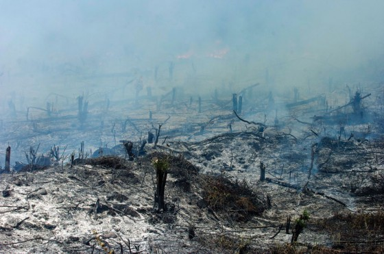 The tradition of slash-and-burn farming cannot continue