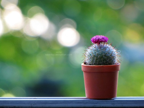 mini_cactus_by_rabbitka-d53wsyi