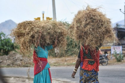 Carrying hay
