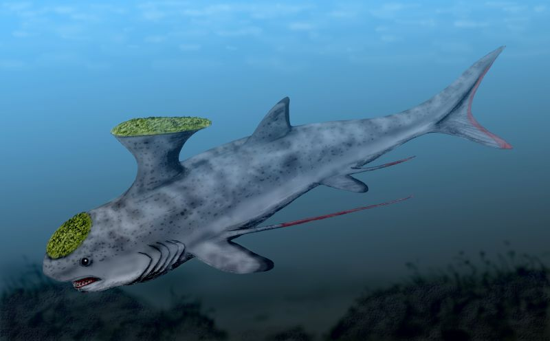 3 Ancient Sharks That Were Weird as H*ck