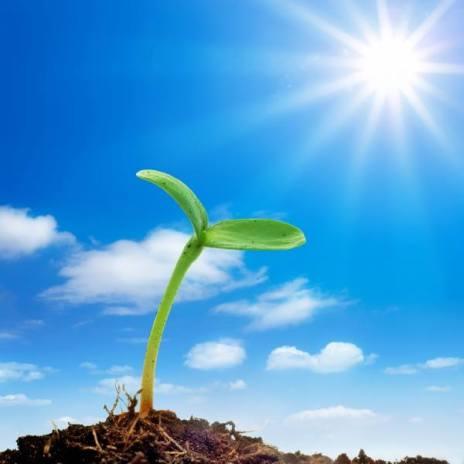 希望的種子發芽