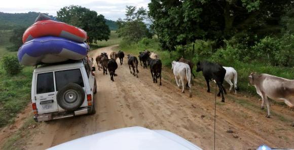 "Barinas ""Plains"" in Venezuela"