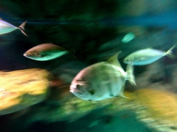 zooming fish