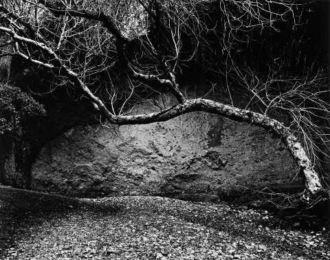 Tree and Wall, West Pinnacles,Edna Bullock 1985. © 1985/2016 Bullock Family Photography LLC.