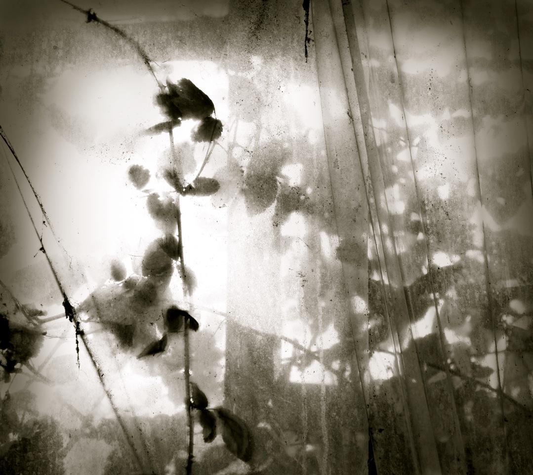 Hope © Joanne Teasdale