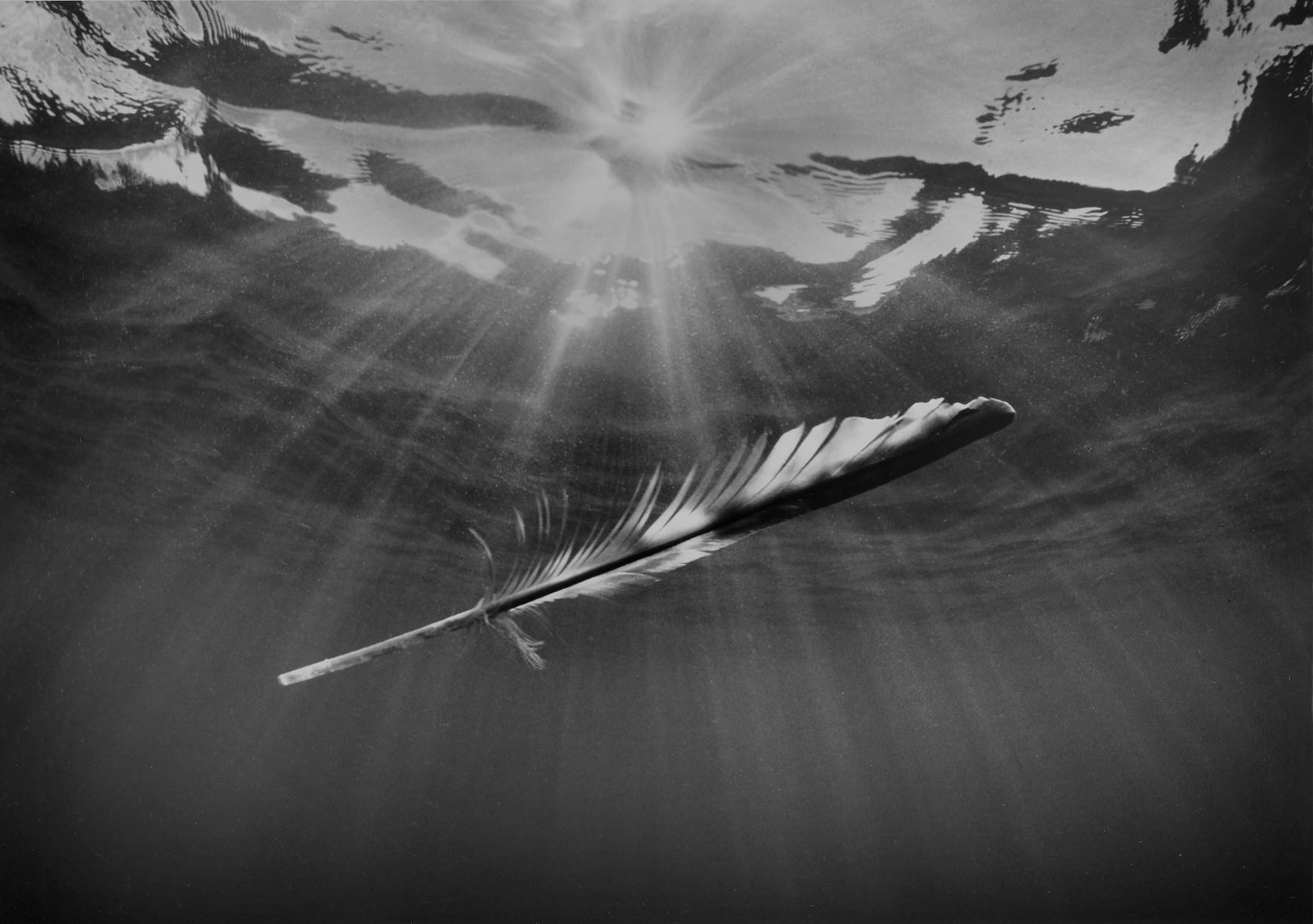 Feather With Ocean Light, © Chuck Davis