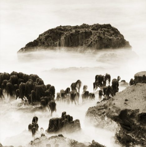 Sea Palms 2 © Jack Wasserbach