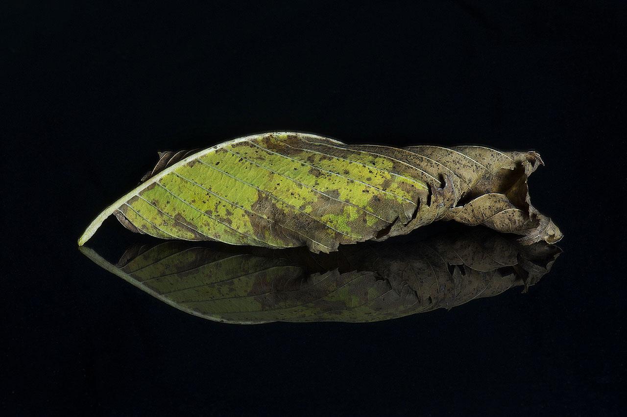 Leaf 2 © Terri Cappucci
